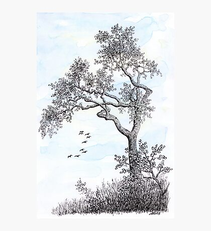 PENDRAWING TREE - BACKGROUND AQUAREL Photographic Print