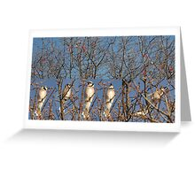 Blue Jays (Without the Blue) Greeting Card