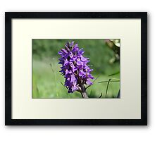The Marsh Orchid Framed Print