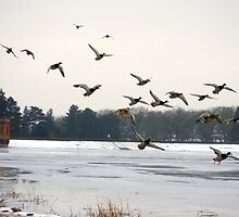 Sywell Country Park in winter time by flashcompact