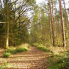 Salcey Forest in autumn by flashcompact