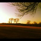 """Evening Falls on the Fields at Waveny Park by Christine """"Xine"""" Segalas"""