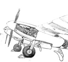 Pencil study of Mosquito by Woodie