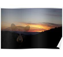 Black Bear Sunset Poster