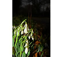 Early Snowdrops Photographic Print