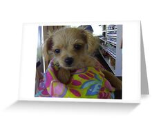 The Cutest Little Puppy. Greeting Card