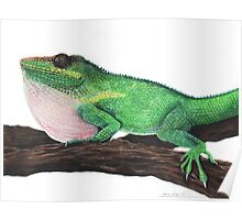 Cuban Knight Anole Poster