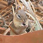 Chipmunks are so Cute by Robert E. Alter / Reflections of Infinity, LLC