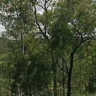 Trees at Lake Monduran 5 by STHogan