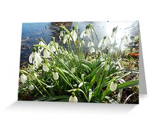 Snowdrops by the Waters Edge Greeting Card