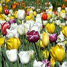 Colours True by Barham Ferguson