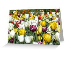 Colours True Greeting Card