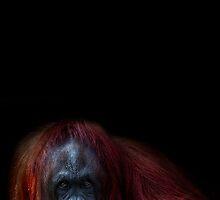 Orangutan Chicks dig me by alan shapiro