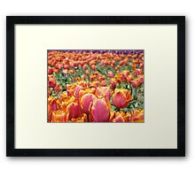 Tulip Festival Fine Art Prints Pink Orange Tulips Floral Framed Print