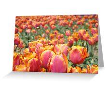 Tulip Festival Fine Art Prints Pink Orange Tulips Floral Greeting Card