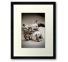 What a Lazy Feline.... Framed Print