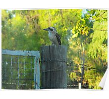 Bluff's  Best Kookaburra Sanctuary    Poster