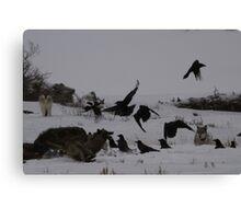 Chasing Ravens #1 Canvas Print