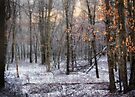 Through The Woods Into The Sunset by Yelena Rozov