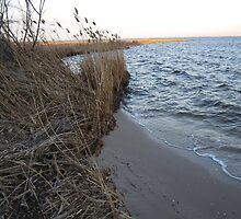 Bay Breeze by RVogler