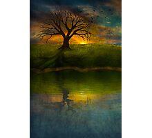 Silent Tree I Photographic Print