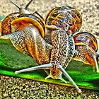 Snail Party by julieapearce