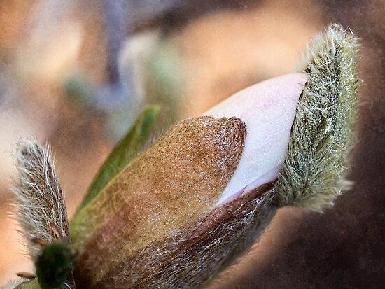 Bud popping its cap by Celeste Mookherjee
