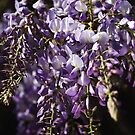 Natural Wisteria Bouquet  by Joy Watson