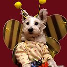 Bella the Bee by Pascal and Isabella Inard