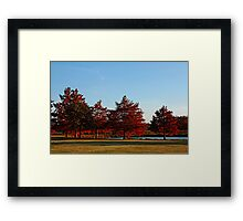 Row of Cypress in the Autumn Afternoon Sun Framed Print