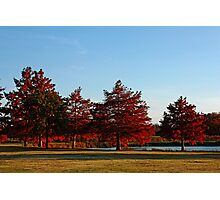 Row of Cypress in the Autumn Afternoon Sun Photographic Print
