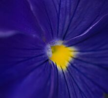Blue Pansy by Gisele Bedard