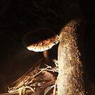 Good Morning Mushroom by Phil Webb