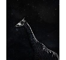 Night Walker Giraffe Photographic Print