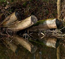 Stumps mirrored by Gary Rayner