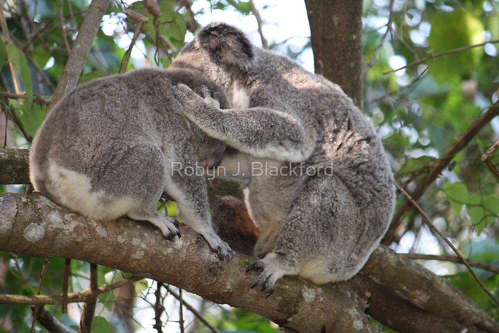 Loving Koala Mum & Bub In Our Trees by aussiebushstick