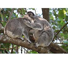 Loving Koala Mum & Bub In Our Trees Photographic Print