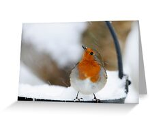I didn't see that in the forecast! Robin in a snowstorm, County Kilkenny, Ireland Greeting Card