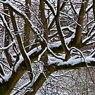 Snow covered tree by Gary Rayner