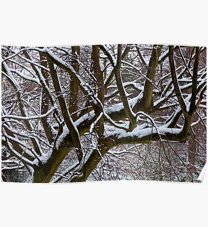 Snow covered tree Poster