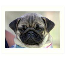 Warrnambool Dog Show Art Print
