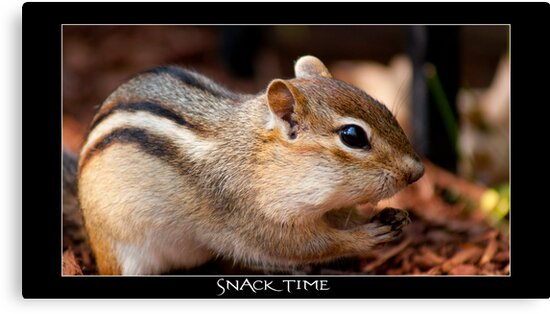 SNACK TIME  by vince dwyer