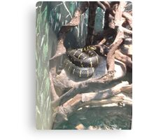 London Zoo/Reptile House/Snake(2 of 2) -(190212)- digital photo  Canvas Print