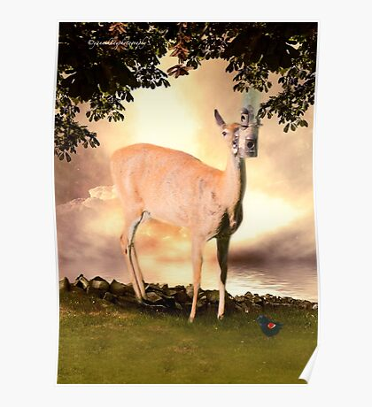 Summer's Dawn (White Tail Deer and Red Wing Black Bird) Poster