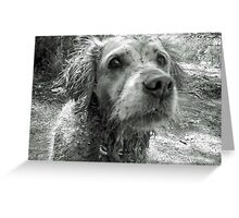 Dirty dog Greeting Card