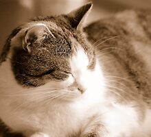 Sleeping - Almost As Great As Eating, Playing And Cuddling :) by vbk70