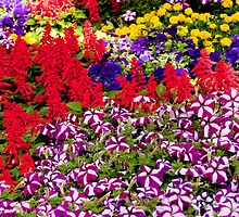 0959 A riot of Spring colour by DavidsArt