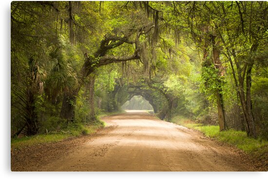 Charleston SC Edisto Island Dirt Road - The Deep South by Dave Allen