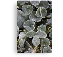 Frosted Delicates Canvas Print