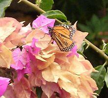Butterfly by Inaar